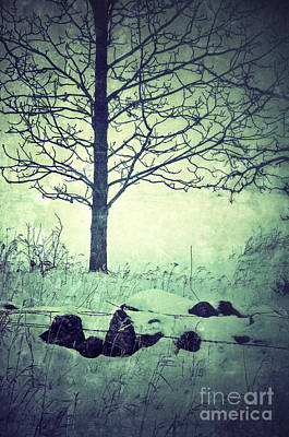 Tree And Fence In The Fog And Snow Art Print by Jill Battaglia