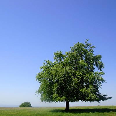 Tree And Field Art Print