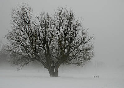 Laura James Photograph - Tree And Geese by Laura James