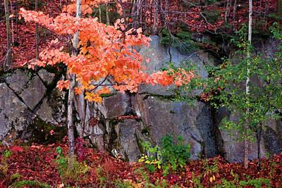 Tree And Rock Art Print