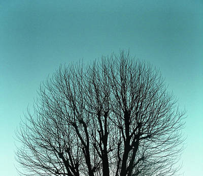 Bare Trees Photograph - Tree And Sky by Richard Newstead