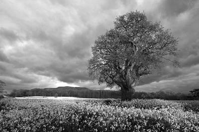 Y120831 Photograph - Tree by Anthony Owen-Jones