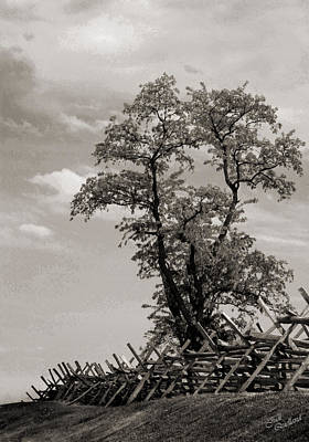 Photograph - Tree At Bloody Lane Black And White by Judi Quelland