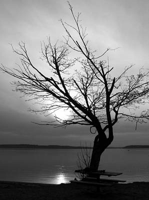 Photograph - Tree At Dusk by Chris Anderson