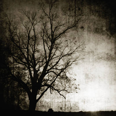 Silhouette Of Tree At Sunset Art Print by Skip Nall