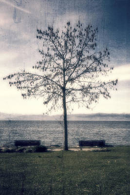Lake Constance Photograph - tree at lake Constance by Joana Kruse