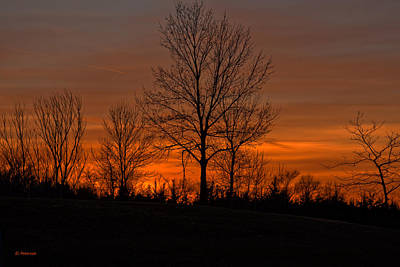 Print featuring the photograph Tree At Sunset by Edward Peterson