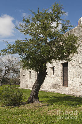 Photograph - Tree At The Espiritu Santo by Kim Henderson