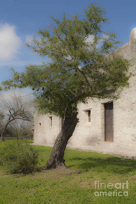 Photograph - Tree At The Fort by Kim Henderson