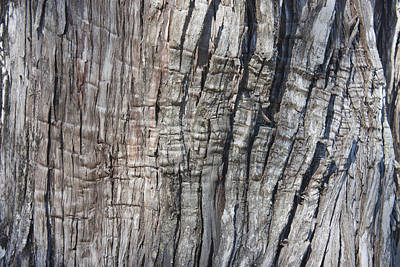 Art Print featuring the photograph Tree Bark No. 1 Stress Lines by Lynn Palmer