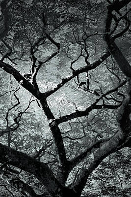 Photograph - Tree Branches by Elizabeth  Doran