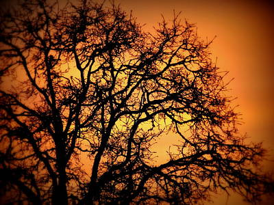 Spritual Light Photograph - Tree Bursting With Setting Sun by Cindy Wright