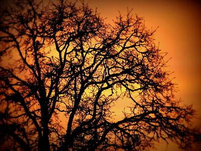 Tree Bursting With Setting Sun Art Print by Cindy Wright