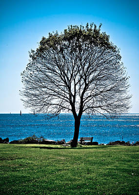 Photograph - Tree By The Sea by Edward Myers