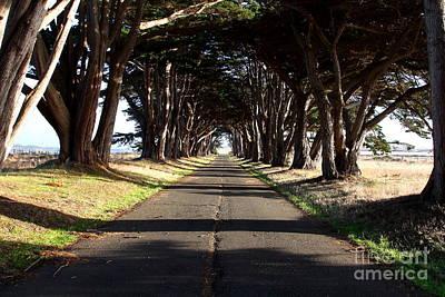 Tree Canopy Promenade Road Drive . 7d9959 Art Print