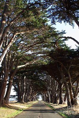 Tree Canopy Promenade Road Drive . 7d9963 Art Print