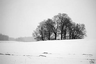 Wall Art - Photograph - Tree Clump In The Snow by Cate Rubin