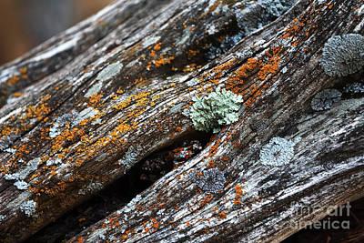 Photograph - Tree Colors by John Rizzuto