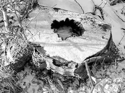 Photograph - Tree Cutoff by Douglas Pike
