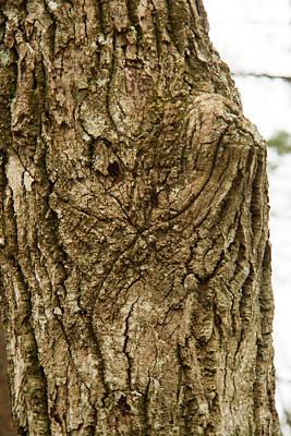 Photograph - Tree Dog Face by Douglas Barnett