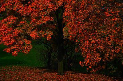 Photograph - Tree by Dragan Kudjerski