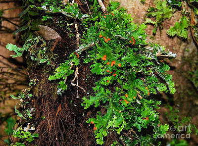 Photograph - Tree Encrusted With Fern 2 by Fran Woods