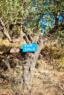 Commercial Photograph - Tree For Sale by Tom Gowanlock