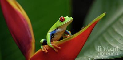 Tree Frog 21 Art Print