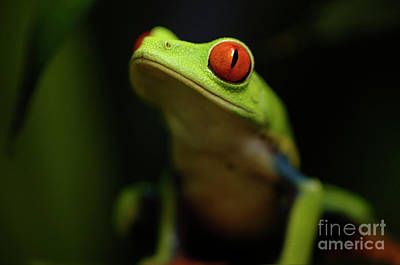 Tree Frog 6 Art Print