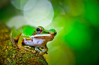 Tree Frog Art Print by Albert Tan photo