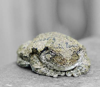 Photograph - Tree Frog Close Up by Kirk Stanley