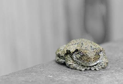 Photograph - Tree Frog by Kirk Stanley