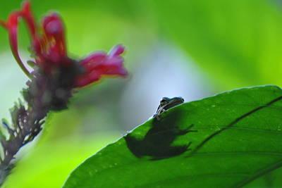 Art Print featuring the photograph Tree Frog Peeking Over Leaf by Jodi Terracina