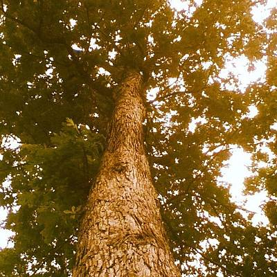Angle Photograph - Tree From A Low Anle by Kayla Mitchell