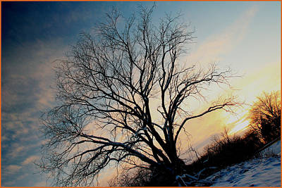 Photograph - Tree by Fuad Azmat