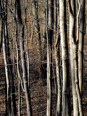 Photograph - Tree Grove In Winter by Beth Akerman