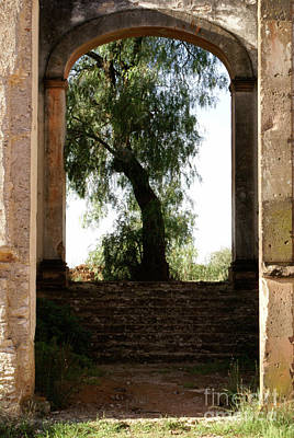 Photograph - Tree Growing In The Ruins Mineral De Pozos Mexico by John  Mitchell