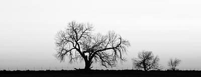 Tree Harmony Black And White Art Print by James BO  Insogna