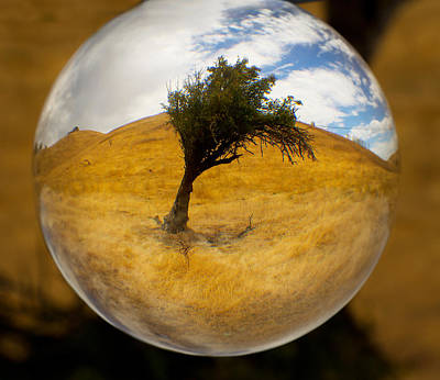 Photograph - Tree In A Field Through A Glass Eye by Robert Woodward