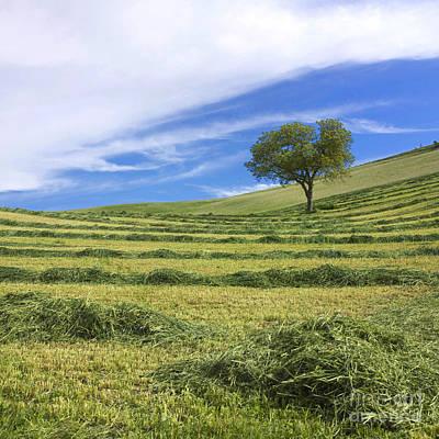 Tree In A Mowed Field. Limagne. Auvergne. France. Europe Art Print by Bernard Jaubert