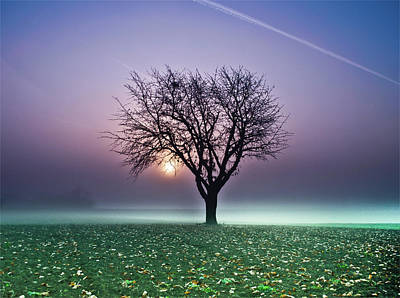 Bare Trees Photograph - Tree In Field by Ulrich Mueller