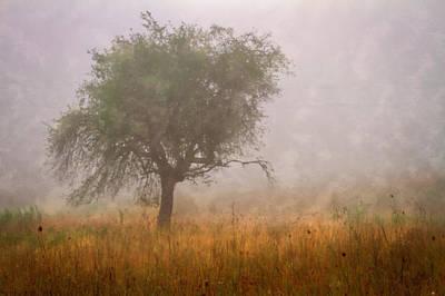 Tree In Fog Art Print by Debra and Dave Vanderlaan