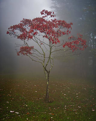 Photograph - Tree In Fog by Rick Hartigan