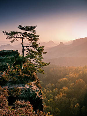 Tree In Morning Llght In Saxon Switzerland Print by Andreas Wonisch
