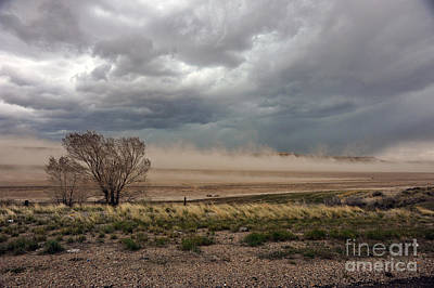 Photograph - Tree In Path Of Wind Storm by Dan Friend