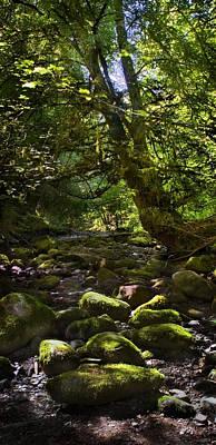 Photograph - Tree In Reelig Glen by Joe Macrae