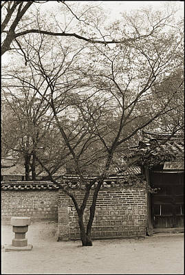 Photograph - Tree In Seoul Garden by Julie VanDore