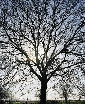Tree In Silhouette Art Print by Michael Marten