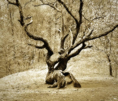 Tree In The Forest Art Print by Susan Leggett