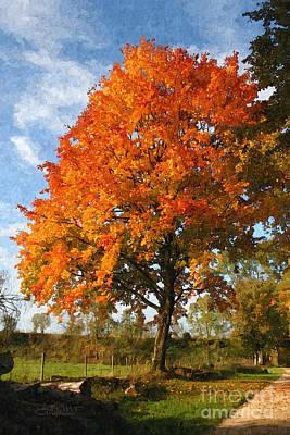 Photograph - Tree In The Sun by Jutta Maria Pusl